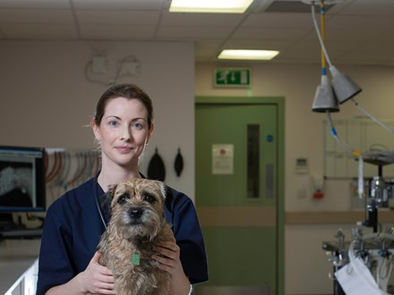 Veterinary Radiology and Ultrasound Dog