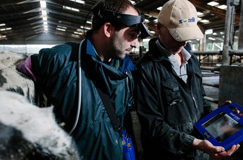 Easi-Scan bovine ultrasound scanner in use