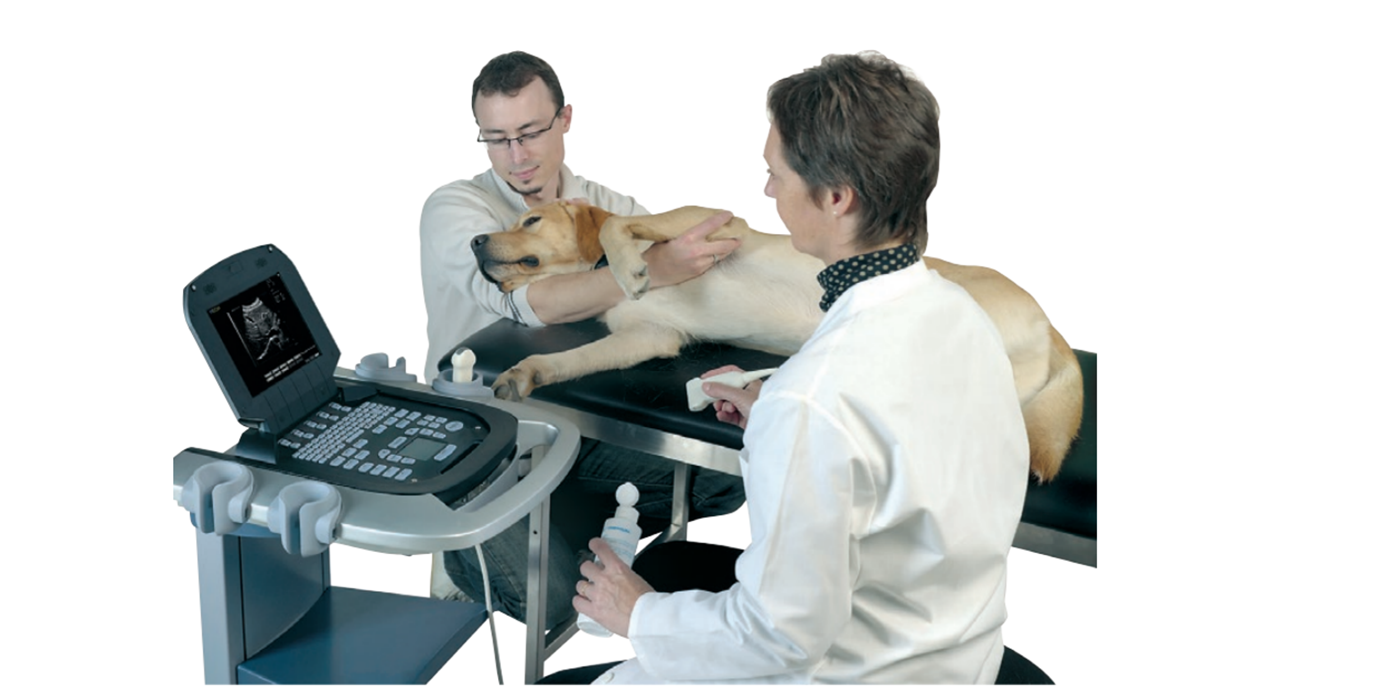 Equine veterinary ultrasound ExaGo in use