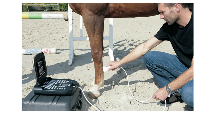 Equine veterinary ultrasound ExaGo on horse