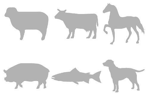 sheep, cow, horse, pig, fish, dog