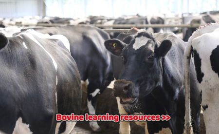 Bovine learning resources