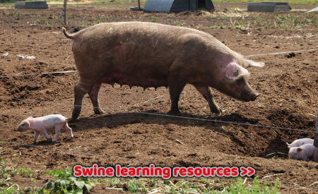 Swine learning resources