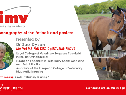 Sue Ultrasonography of the fetlock and pastern